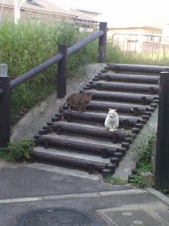 猫懐っこい人